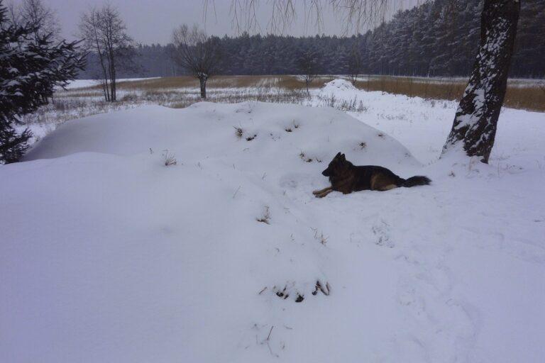 Kopiec przysypany śniegiem